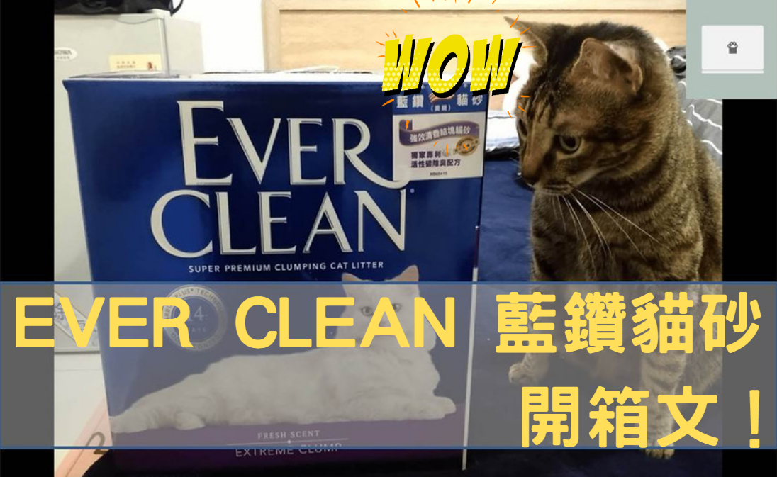 ever clean 藍鑽貓砂開箱