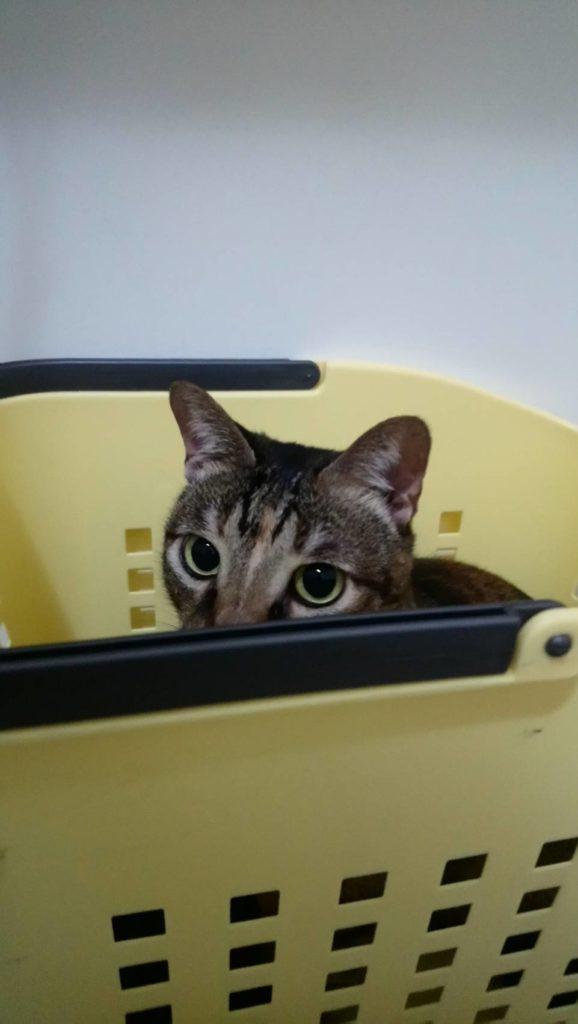 貓咪亂尿尿的主因之一