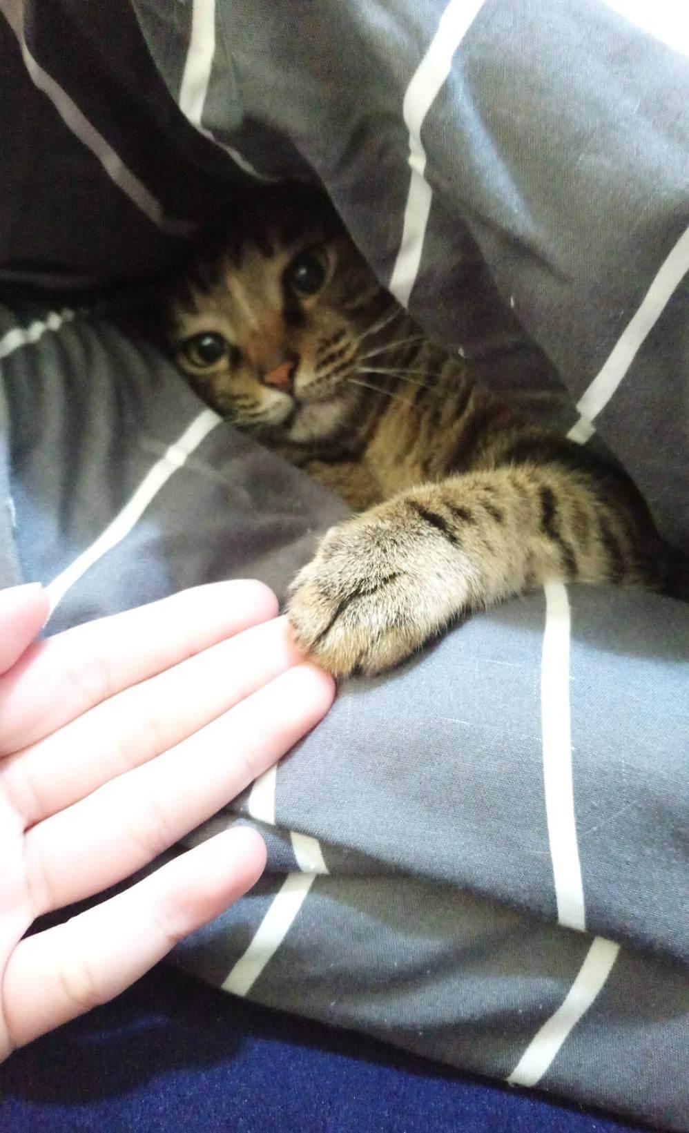 與寵物溝通
