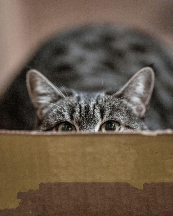 遛貓前練習