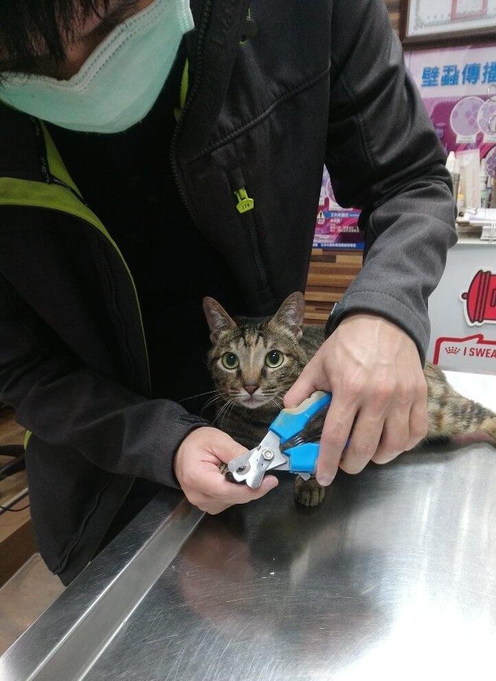 幫貓咪甲指甲