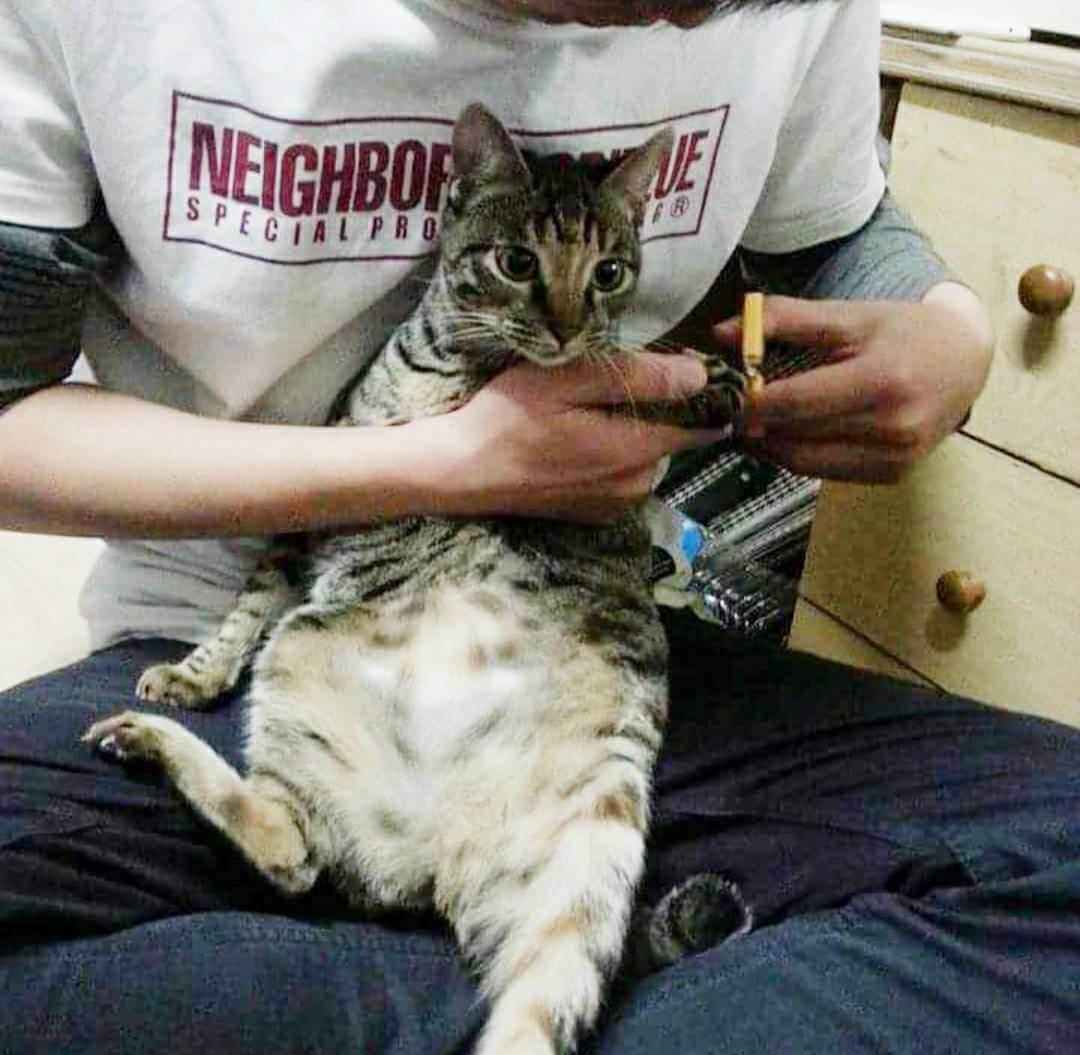 幫貓咪剪指甲