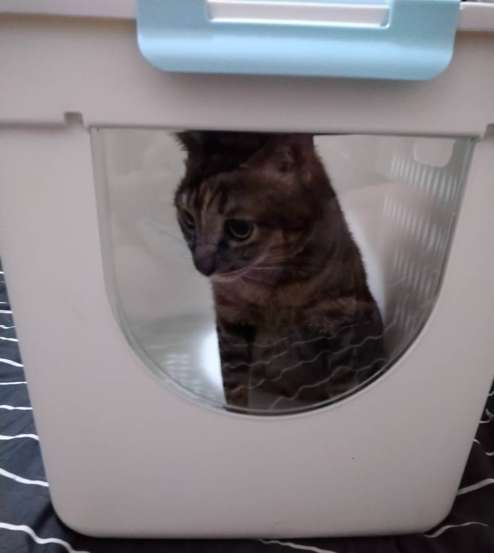 立桶貓砂盆 展示