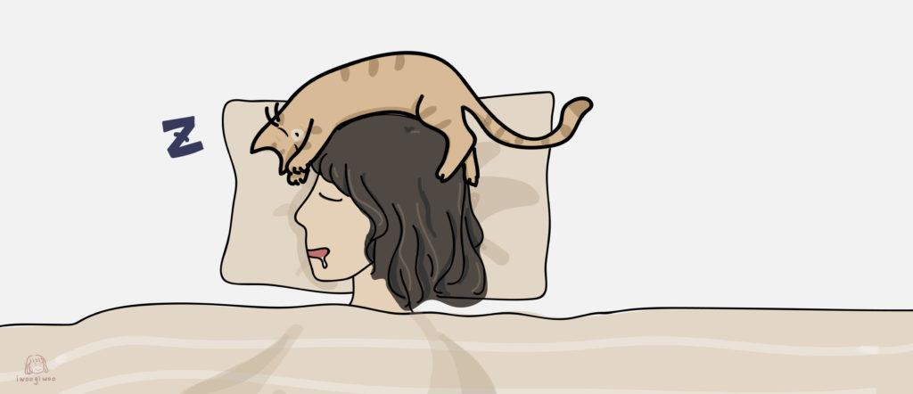 貓咪睡在頭頂
