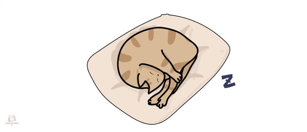 貓咪自己睡