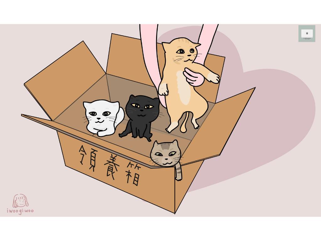 貓咪送養者須知!3個方向篩選領養人!