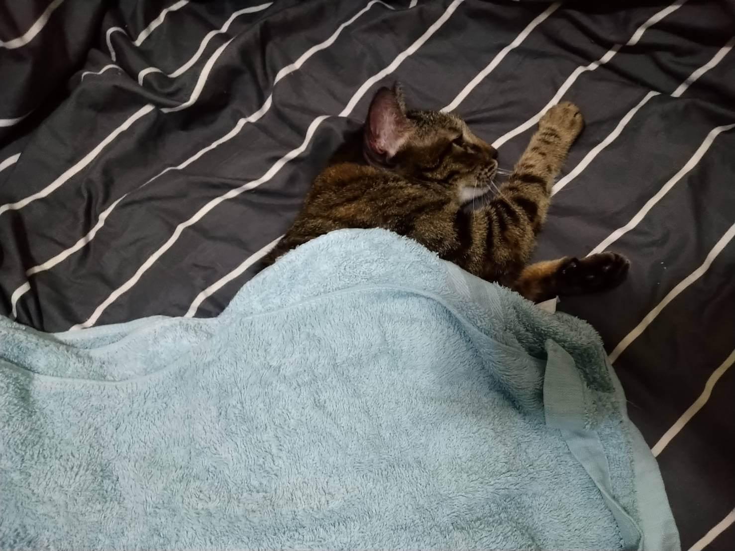 貓咪洗澡步驟4