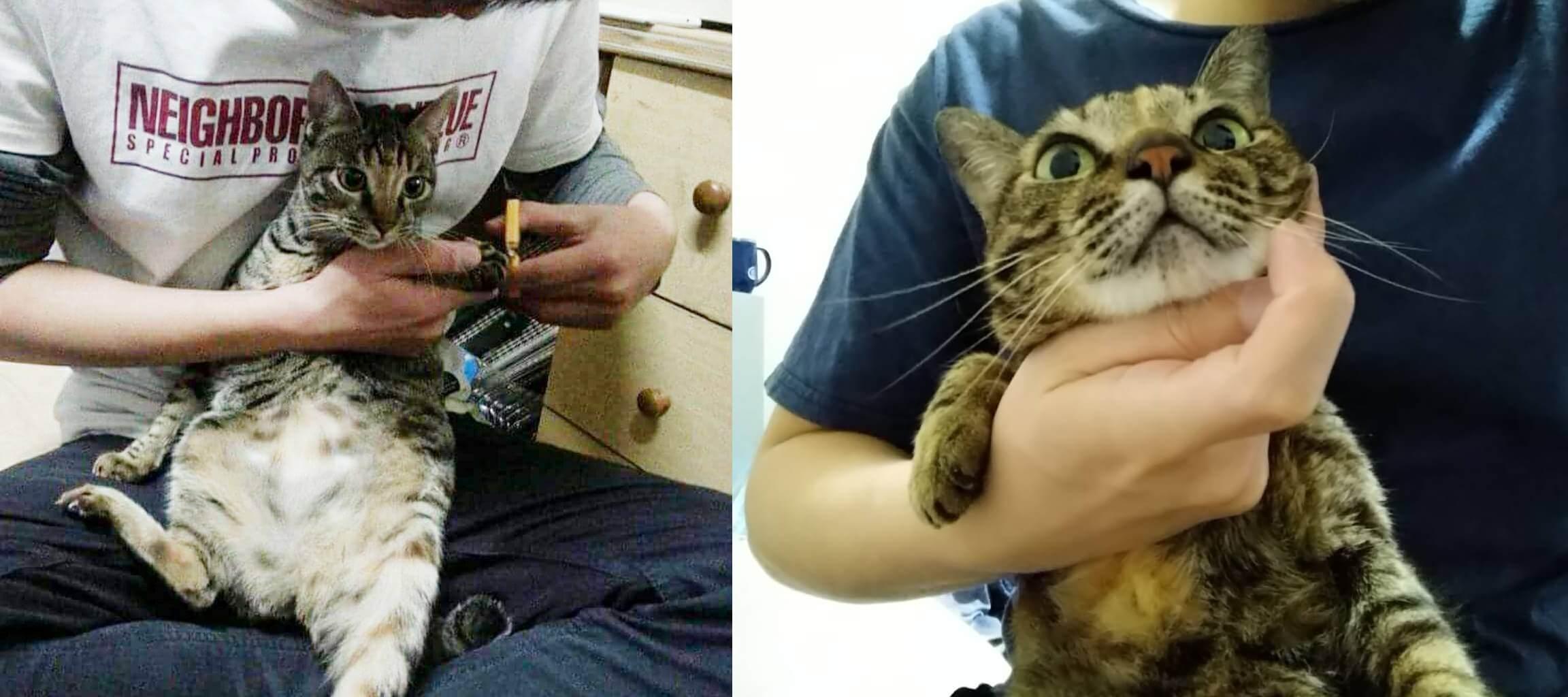 貓咪用噴式潔牙凝露 步驟1