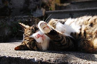 貓咪陽光治療貓癬