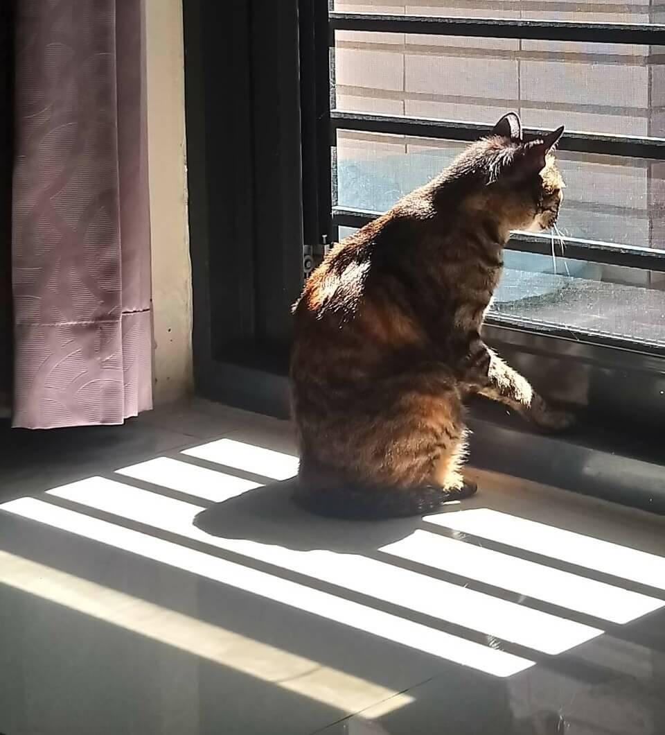 養貓房間亮度