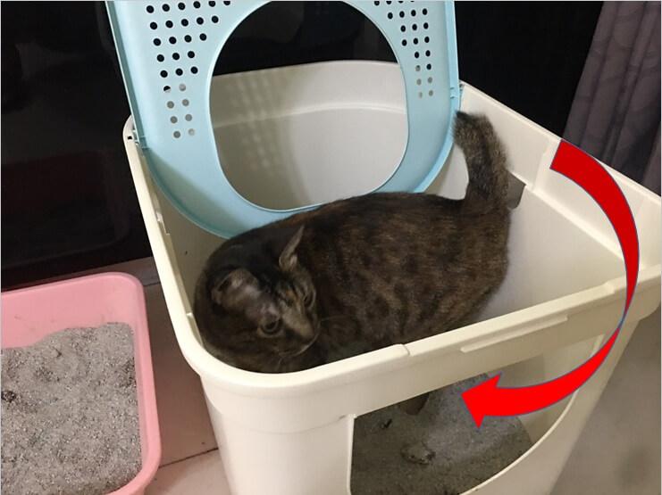 貓砂盆挑選方式