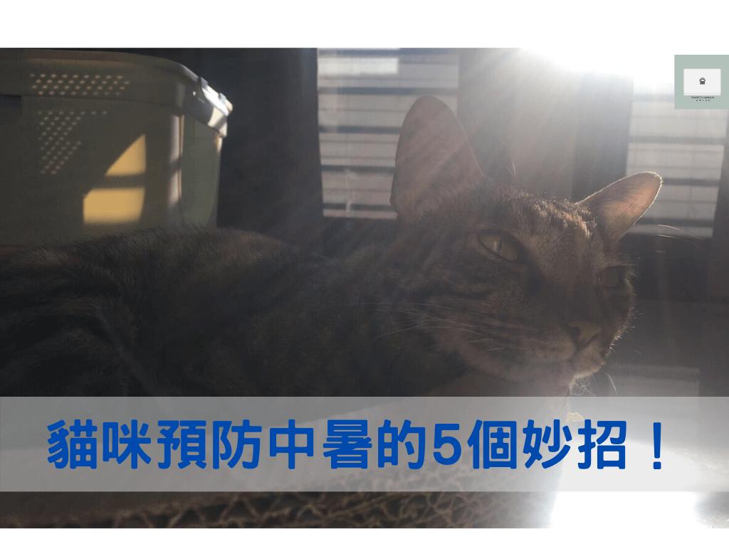 避免熱衰竭!貓咪夏天預防中暑的5個方法!