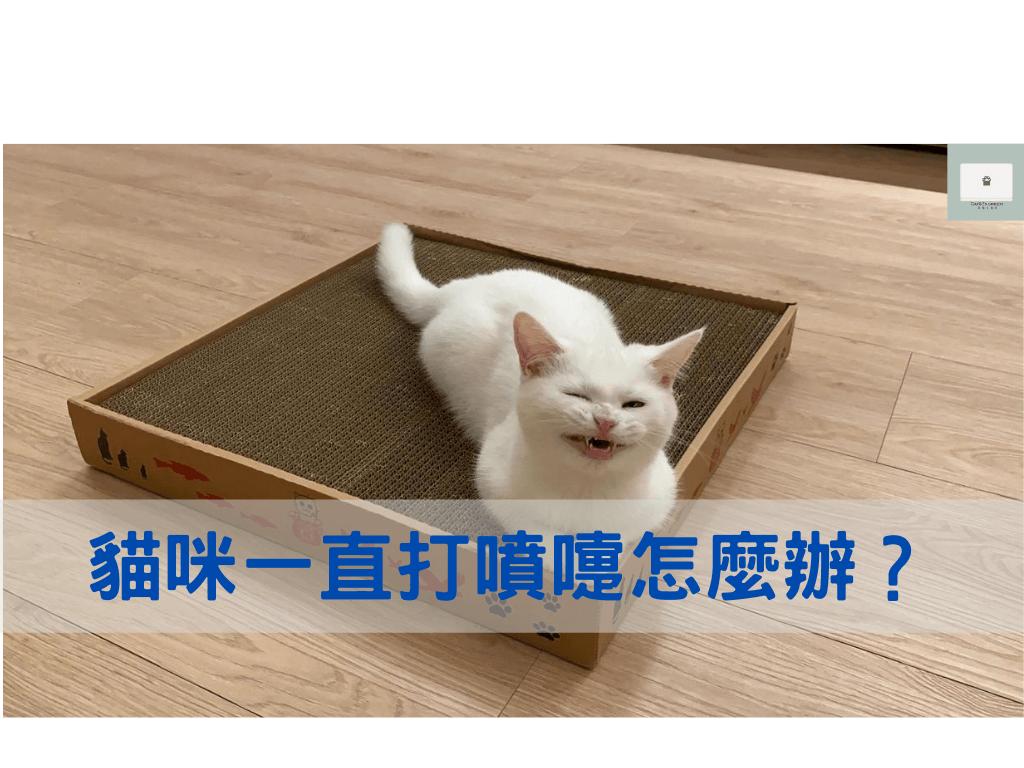 貓咪打噴嚏怎麼辦