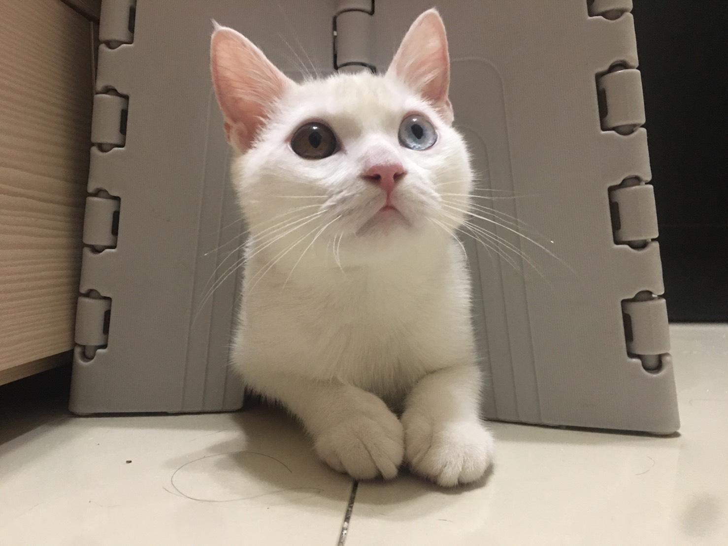 貓打噴嚏原因3