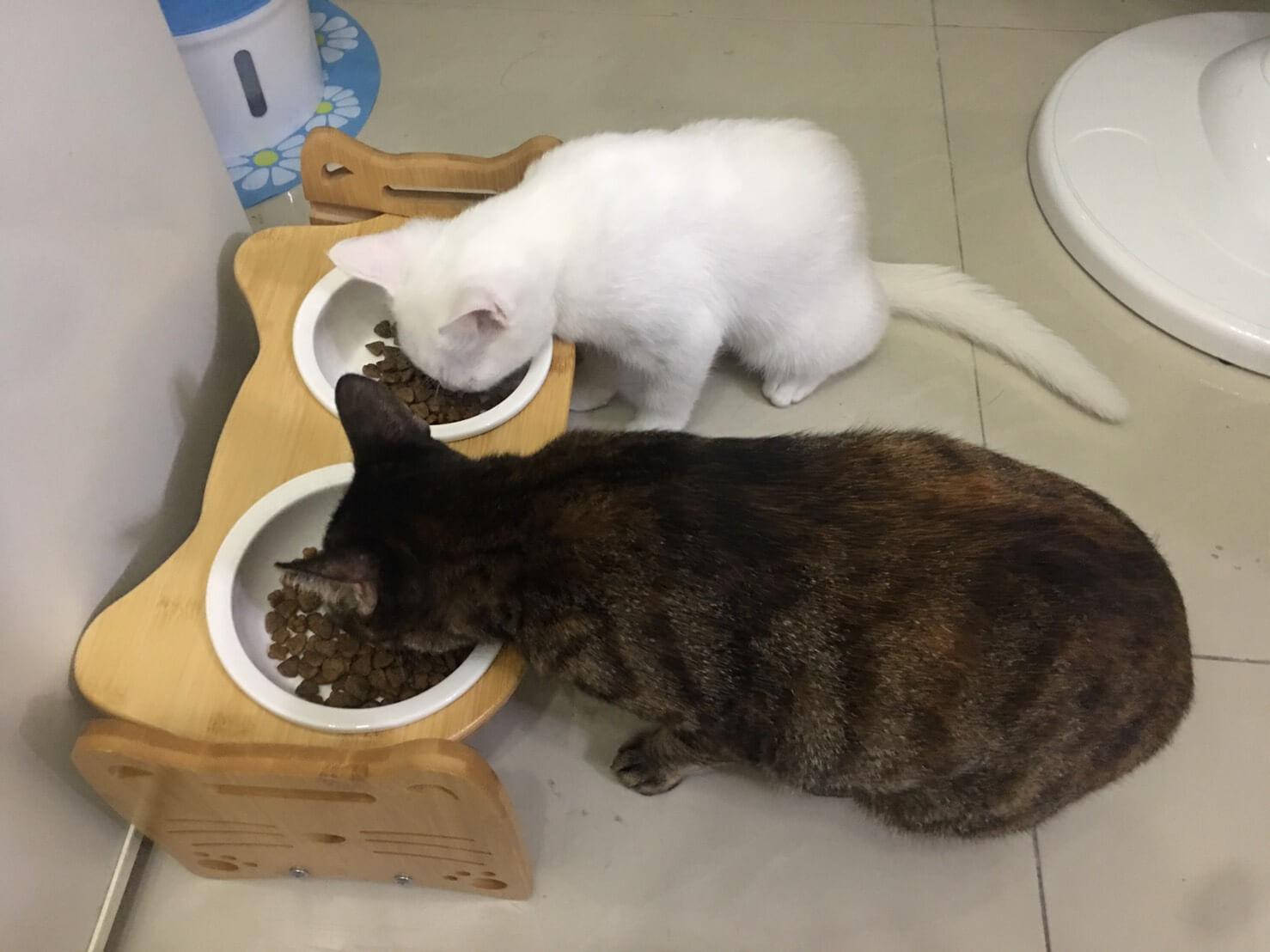 貓餐桌頸椎反駁4