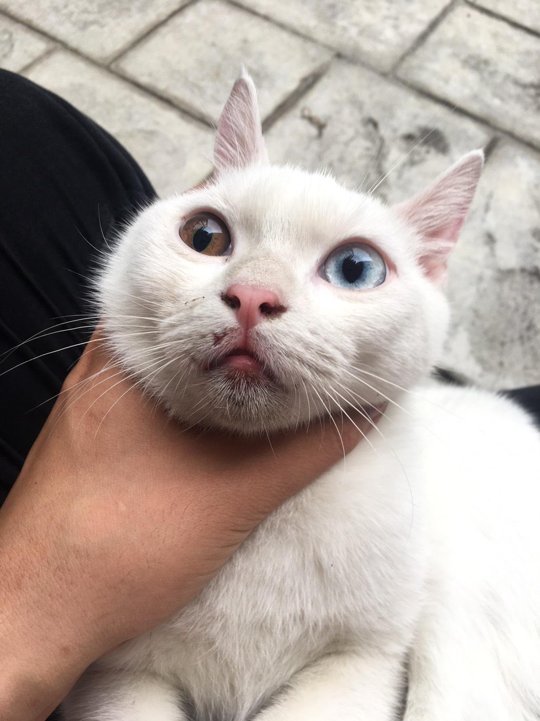 貓咪走失-成功找回貓咪