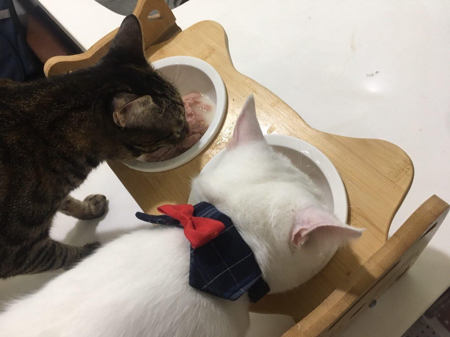 貓侍馬卡龍副食罐試吃2