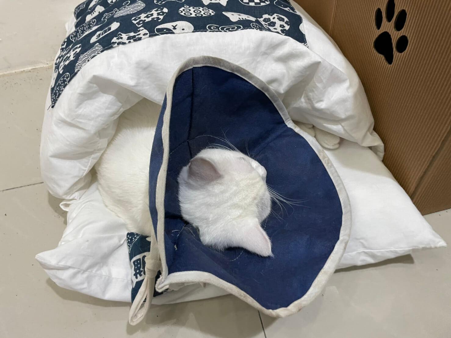 貓絕育補助