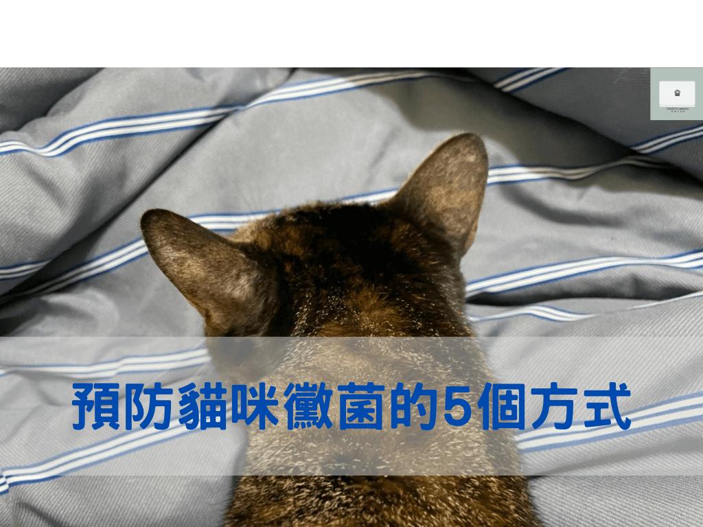 貓得黴菌怎麼辦?告訴你預防貓癬的5個方法!
