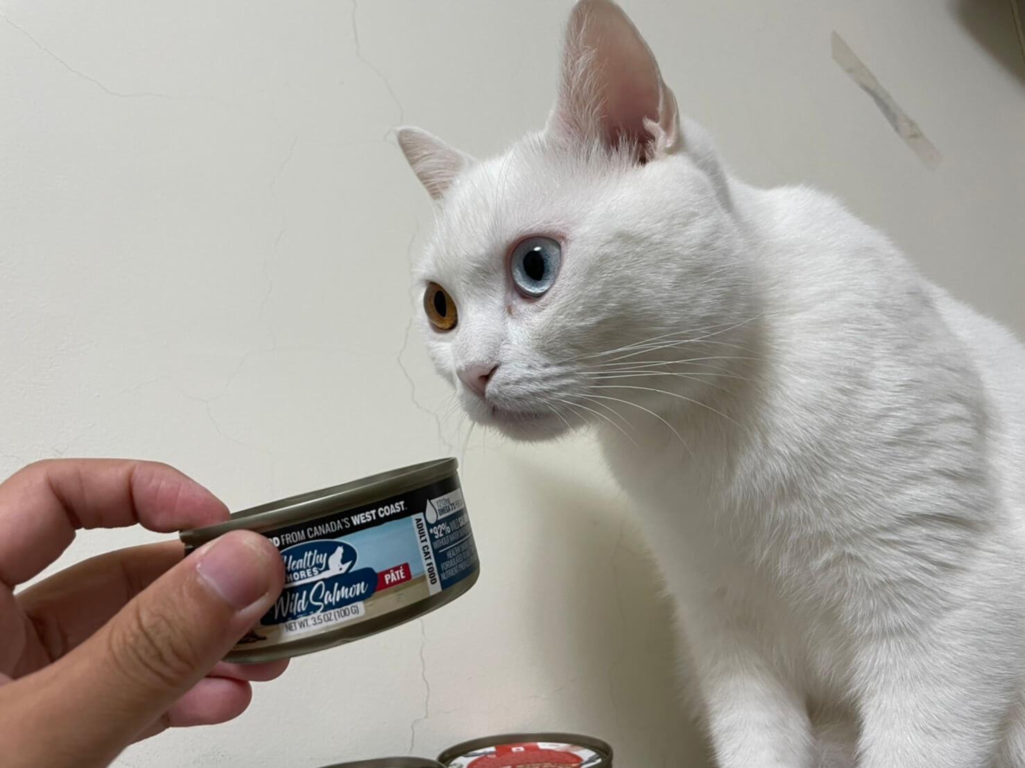 加拿大健康海岸貓主食罐 價格